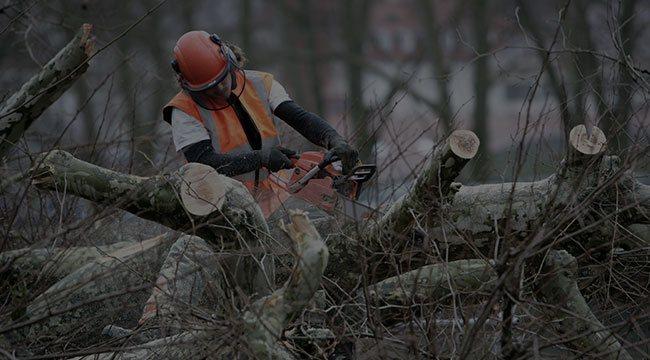 Waxhaw Tree Service